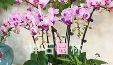 花卉租赁.png
