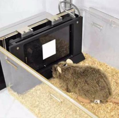 动物行为学软件.png